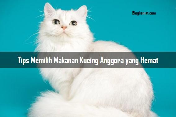 Tips Memilih Makanan Kucing Anggora yang Hemat